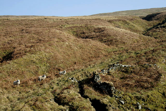 The remains of an old sheepfold at Holm Sikes