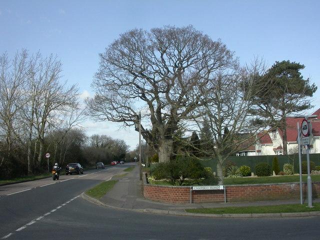Burton, oak tree