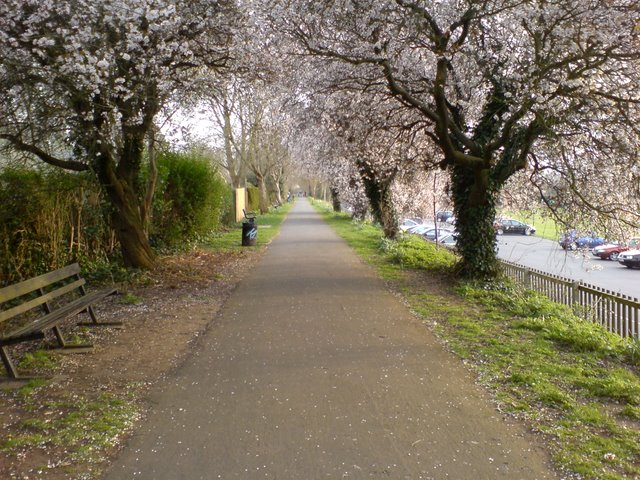 Riverbank Walk in spring