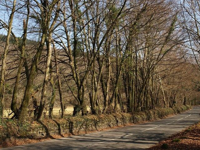 Road near Holne Old Bridge