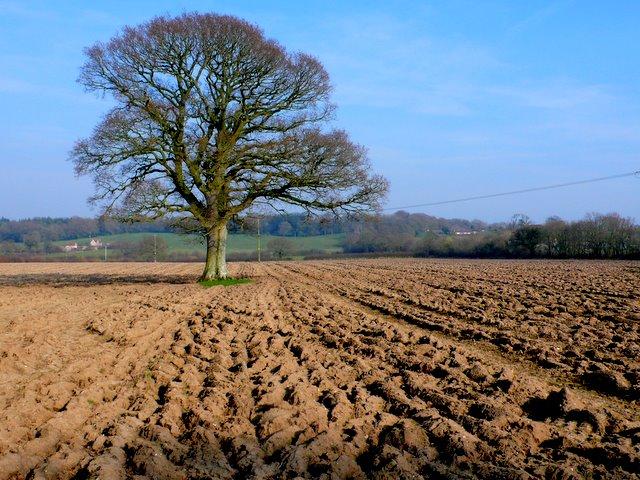 Countryside near Leigh
