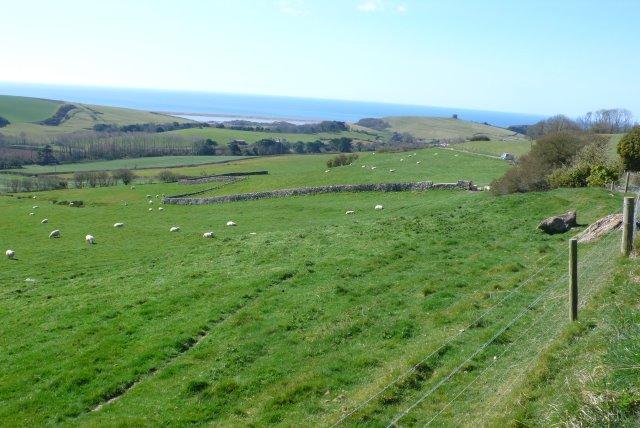 Fields above Abbotsbury