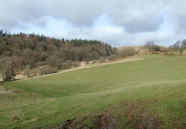 Pasture near to Pont-Rhyd-y-Groes, Ceredigion