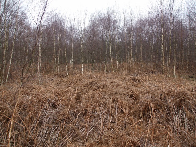 Woodland on Crowle Waste