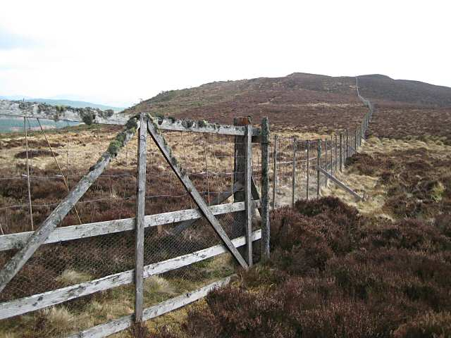 Gate in deer fence