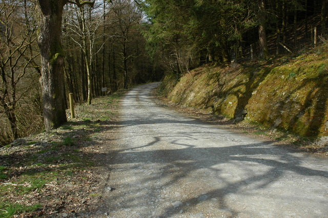 Forest road at Llanwrtyd