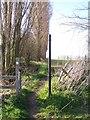 TQ9763 : Saxon Shore Way on Deerton Street by David Anstiss