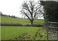 ST6461 : 2009 : Fields near Chelwood by Maurice Pullin