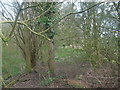 TM2284 : Trackbed looking towards Harleston by Ashley Dace