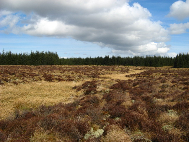 Open Bogland