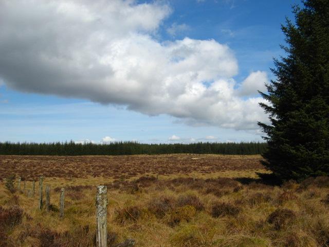 Fence, forest & Bogland