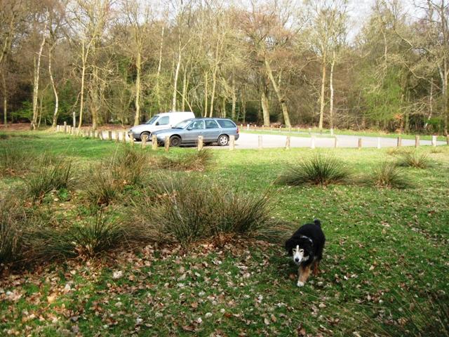 Roadside Car Park, Ashridge (near Aldbury)