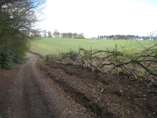Hedge Laying at Shirley Park Farm