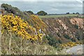 SX0552 : Gorse on the cliff path by roger geach