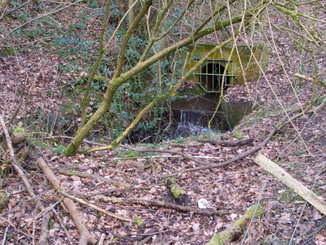 Source of the Wesley Brook