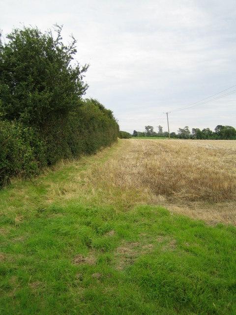 Hedgerow near Lower South Farm