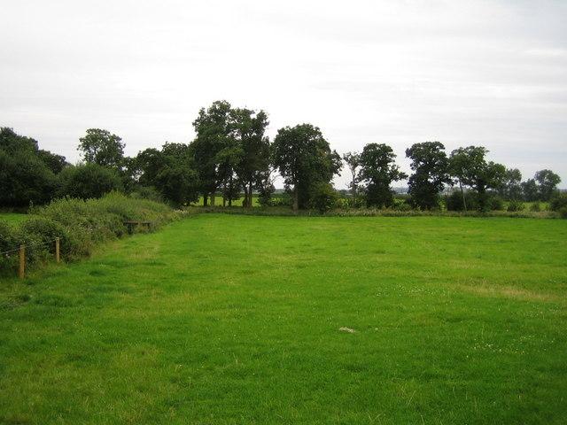 Field edge near Doddershall House