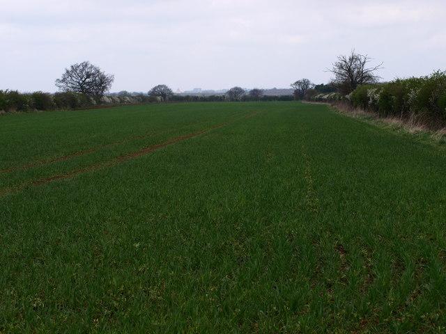 Farmland South of Cotton End