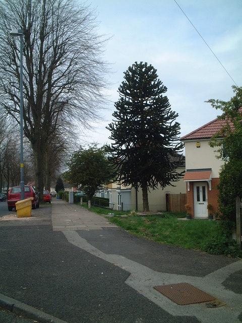 Corner of Glastonbury Road and Selma Grove