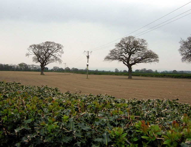 Bare trees and fields