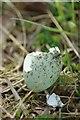 TQ7694 : Sign of Spring : Week 15