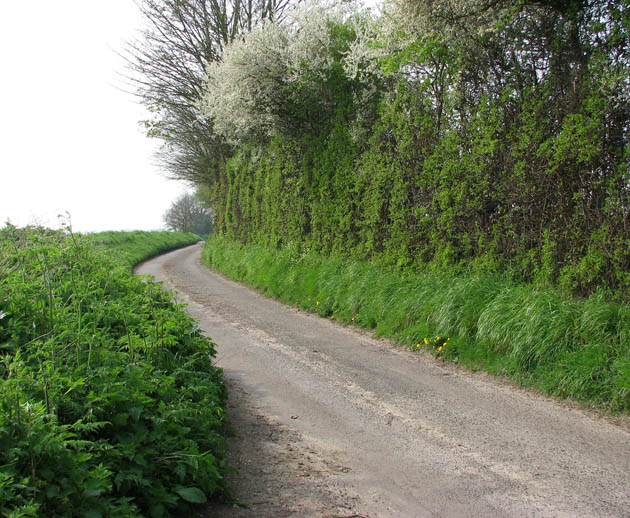 Tall Hedge Beside Rural Lane Evelyn Simak Cc By Sa 2 0