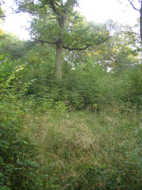 Grendon Wood 4
