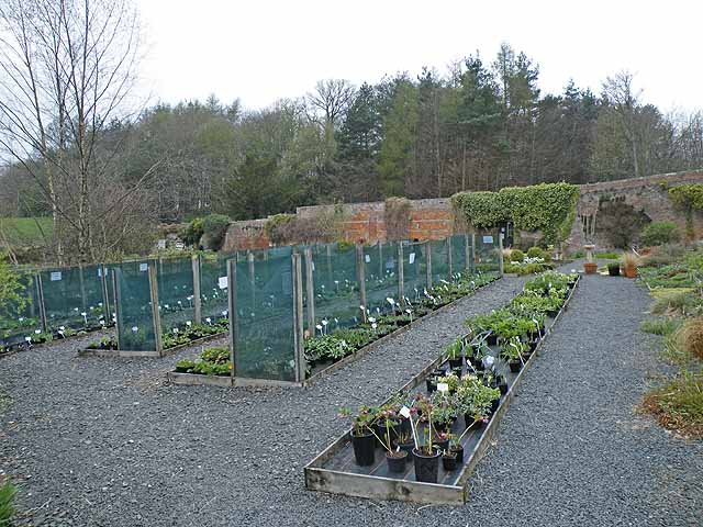 Chipchase Castle Nursery