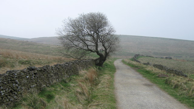 Lonesome tree on Wildmoorstone Path