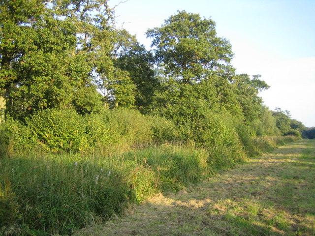 Grendon Wood