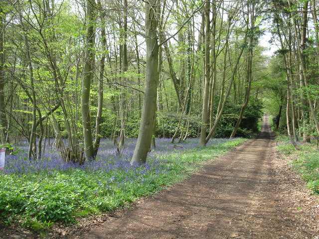 Bluebell Wood, near Ambarrow