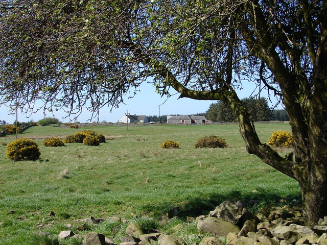 Moorhead of Glenturk Farm