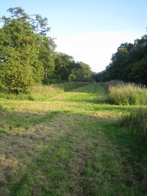 Grendon Wood 3