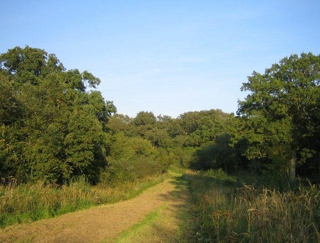 Grendon Wood 5