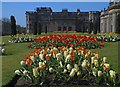 SJ9682 : Springtime at Lyme Hall : Week 16