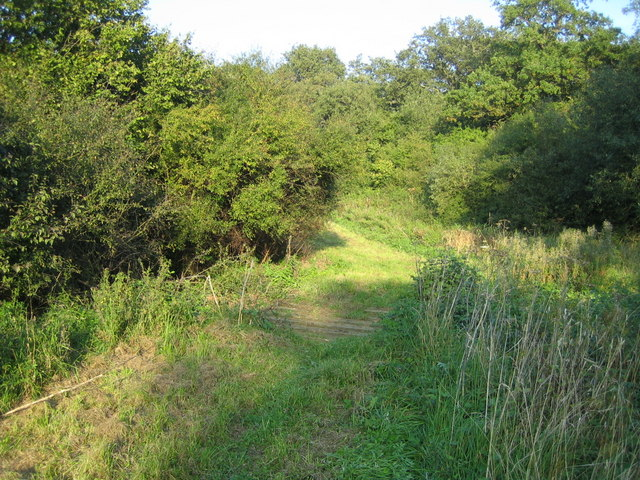 Grendon Wood 6