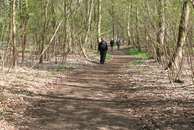 Open woodland at the beginning of the Peddars Way