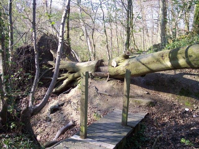 Novel steps over fallen tree trunk