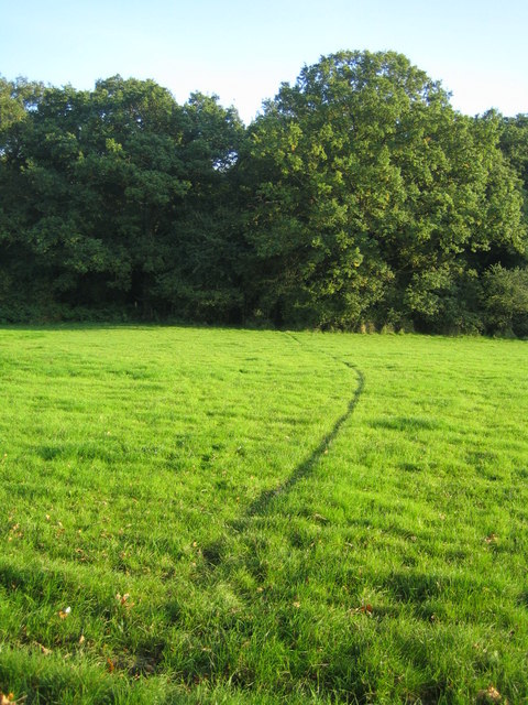 Animal track near Grendon Wood