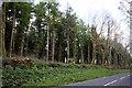 SX3572 : Whiteford Plantation by Tony Atkin