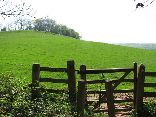 Willis Hill from St Pierre's Great Wood