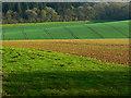 SU2368 : Farmland south of East Croft Coppice : Week 16