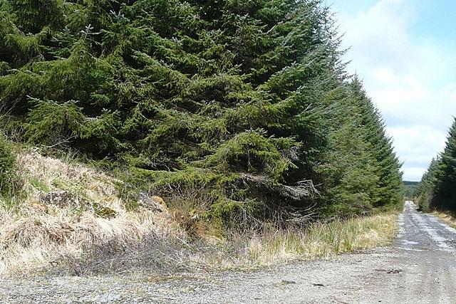Leitir (Letter) forest
