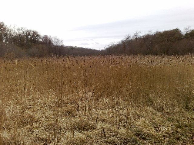 Reeds at Parsonage Moor Nature Reserve