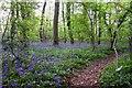 SP5200 : Footpath in Radley Large Wood by Steve Daniels