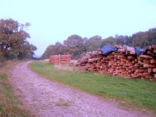 Log Piles, Three Points Lane