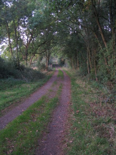 Three Points Lane, Runt's Wood 3