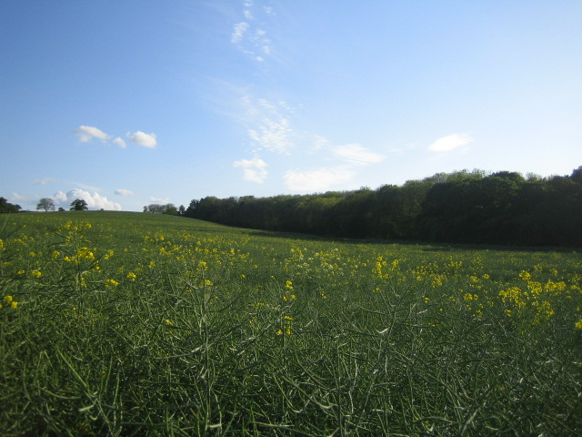 Field near Coppice Lowhill Farm 2