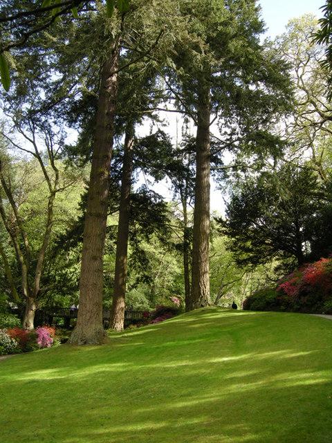 Sequoia in the Dell