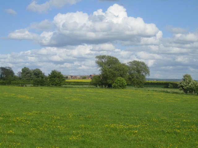 Meadows and hedges near Ford 2